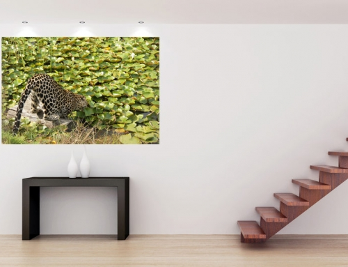 Art print: South Africa's Leopard